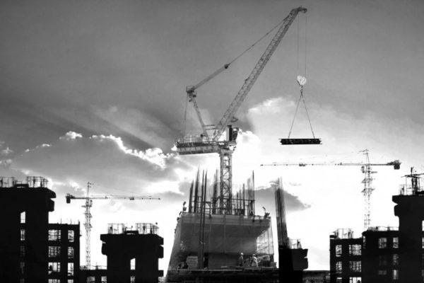 Gray Crane 2